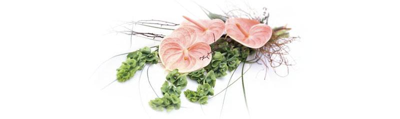 blomst_nedtonet_rosa